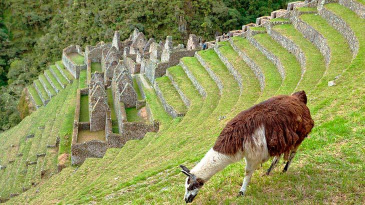 wiñay huayna ruins in inca trail