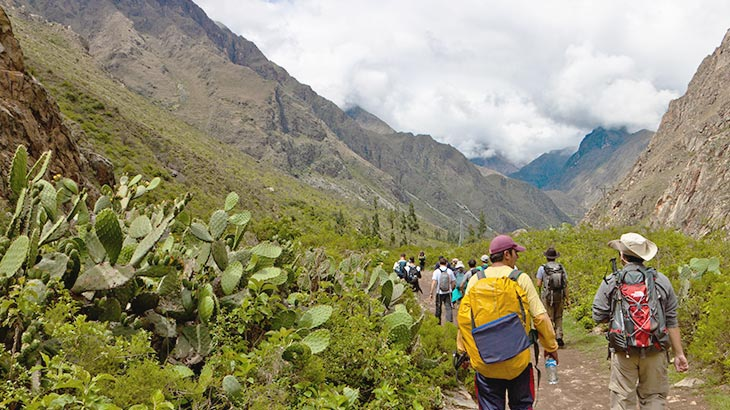 Green trail on the inca trail