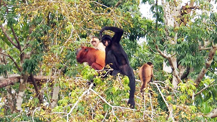 fauna peru jungle