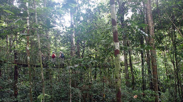 Jungle amazon adventure