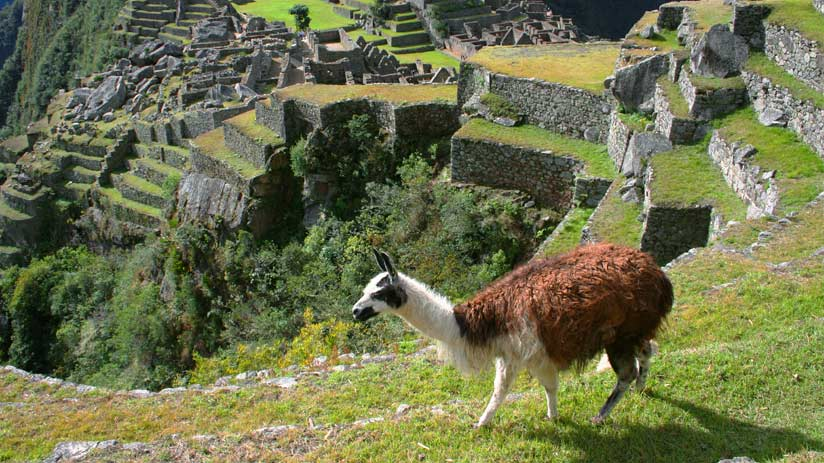 citadel machu picchu travel packages