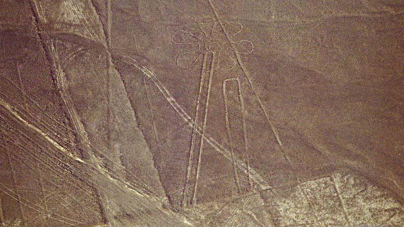 flower nazca lines peru