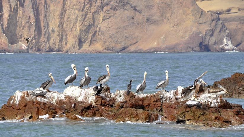 wildlife paracas peru tour