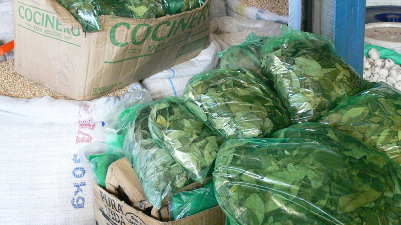where to find the coca leaf