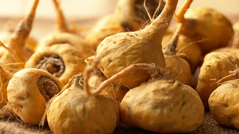 peru superfoods maca healthy for your body