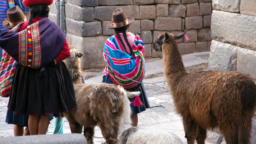 where to find llamas and alpacas