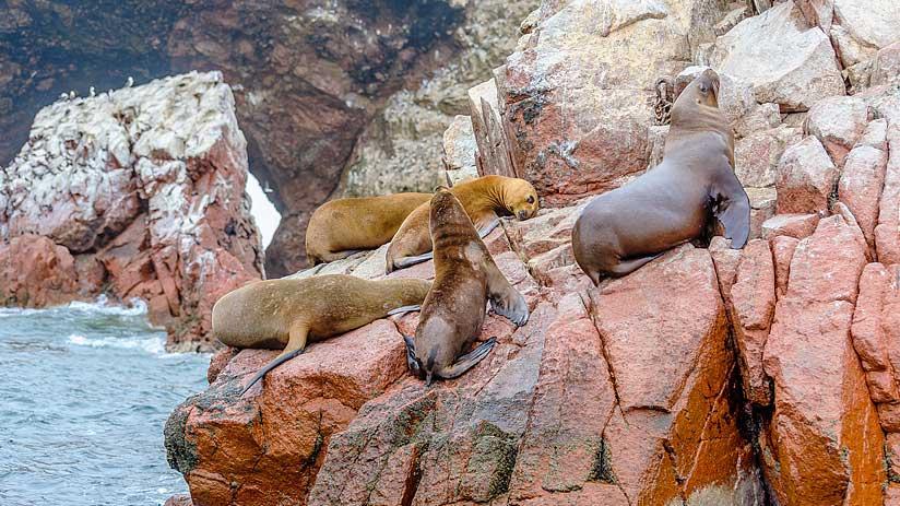 explore peru paracas reserve