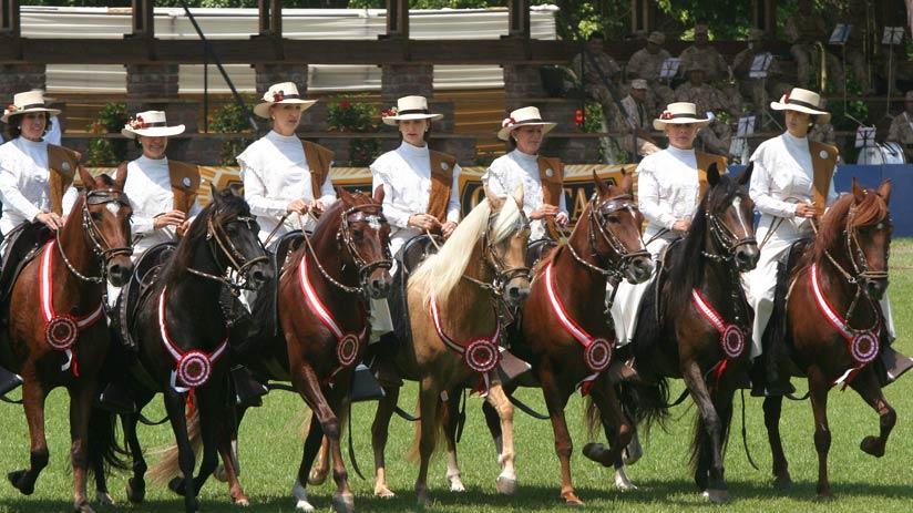 peru holidays peruvian paso horse