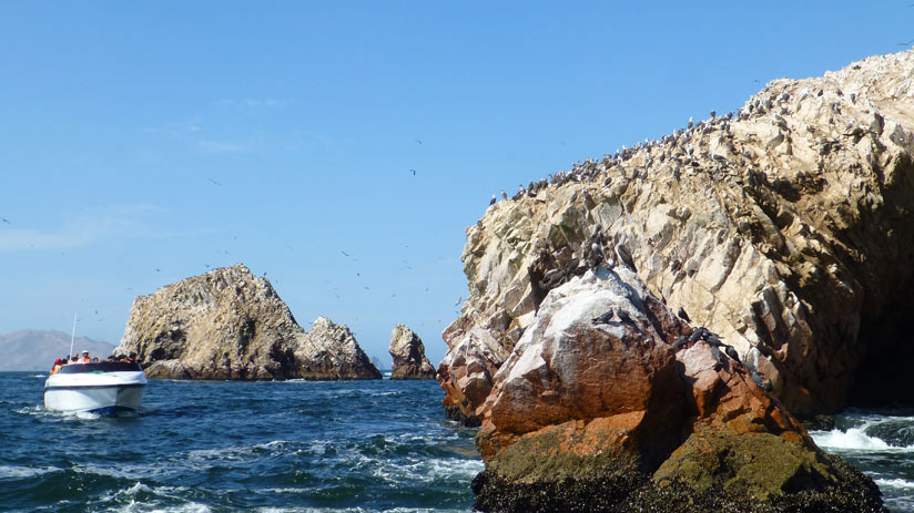 ballestas islands, things to do in paracas peru