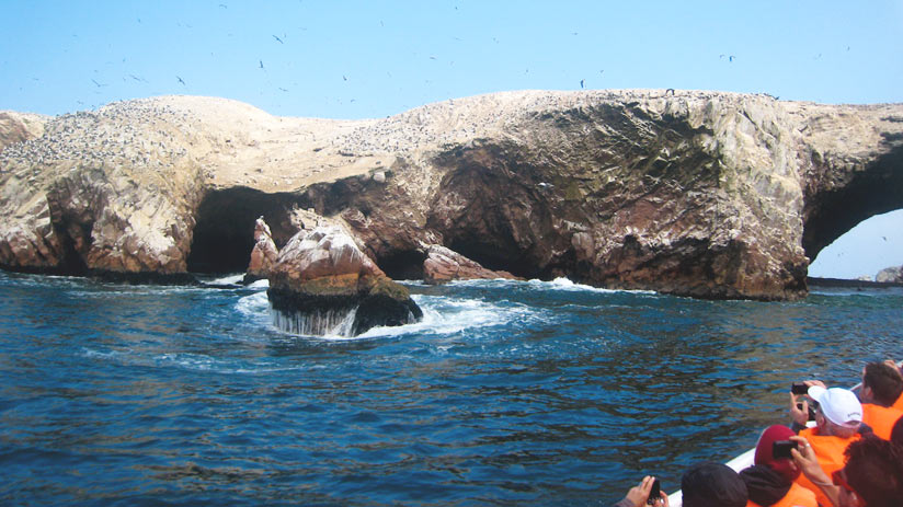 surf to ballestas island is a things to do in paracas peru