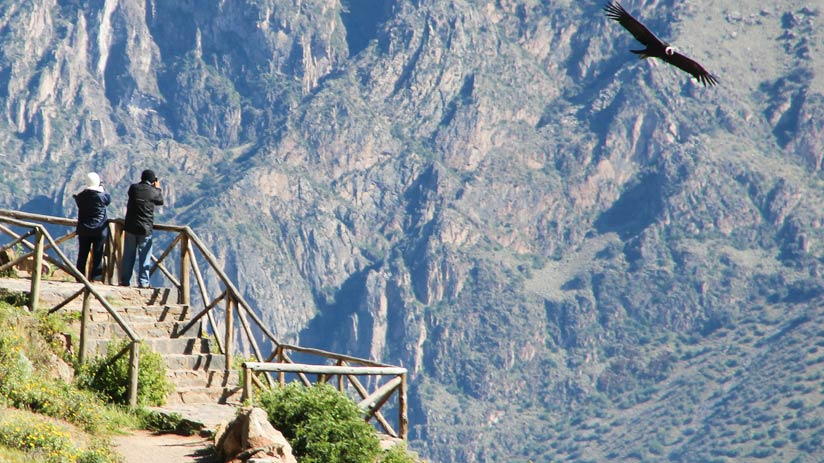 condor in colca canyon, popular tourist destinations in peru