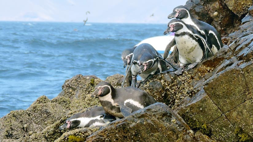 ballestas islands, peru holiday packages