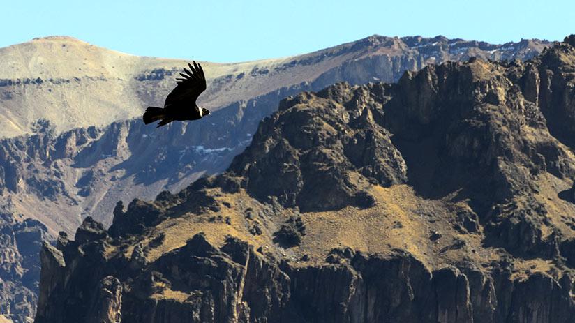 peru itinerary arequipa colca canyon