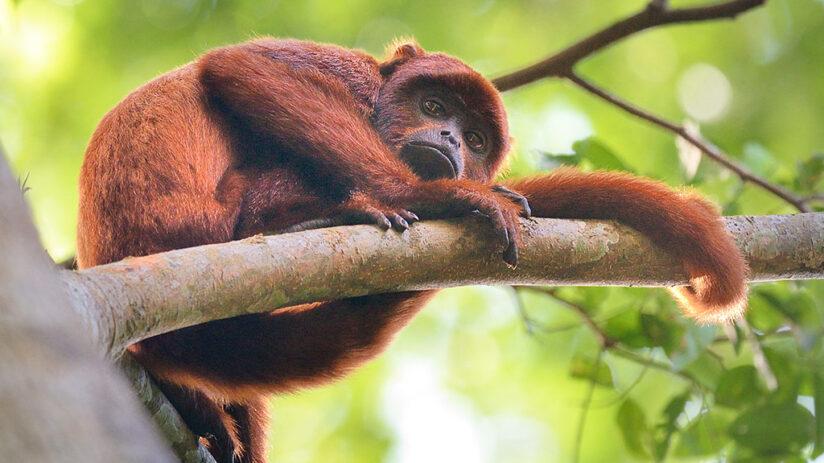 travel to tambopata biodiversity