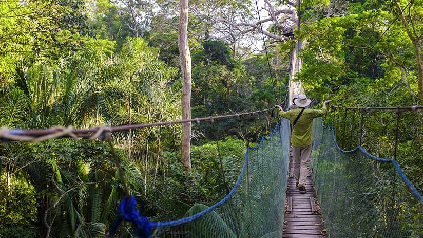 tambopata national reserve canopy walk