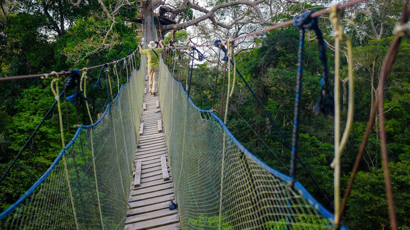 tambopata national reserve canopy walks