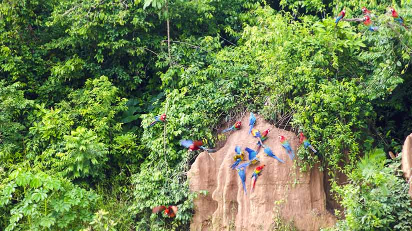 tambopata national reserve clay licks