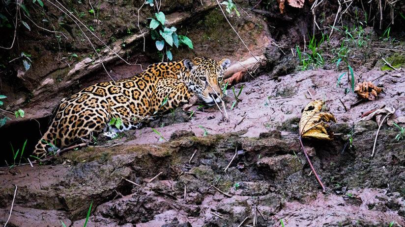 tambopata national reserve human impact