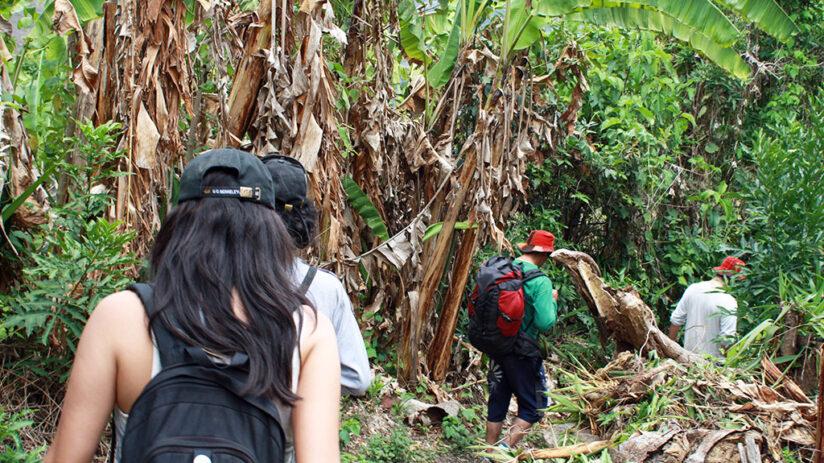 tambopata national reserve jungle treks