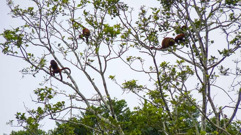 tambopata national reserve jungle walk