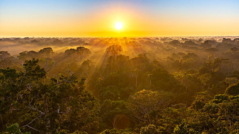 tambopata national reserve sunrise