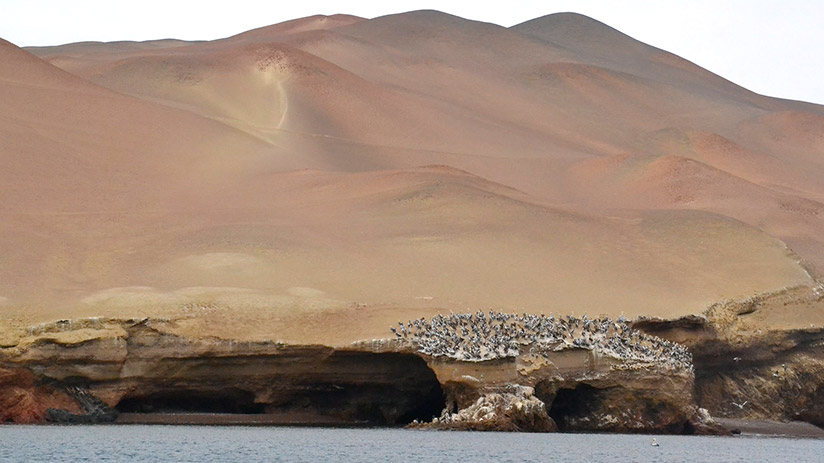travel around peru paracas