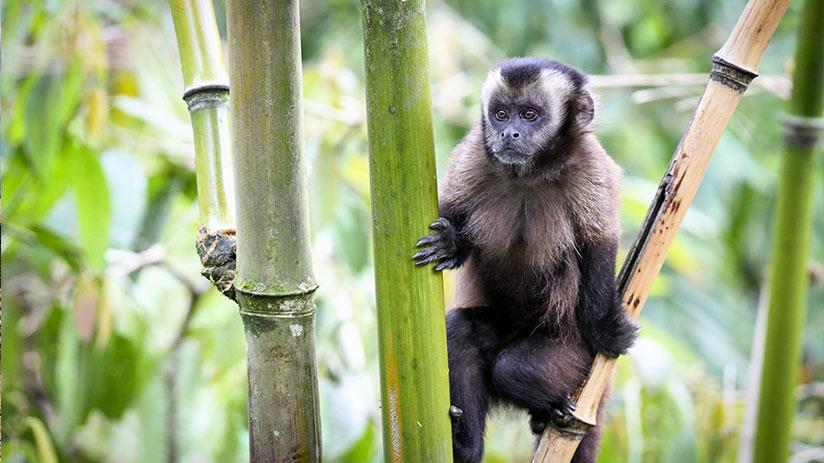 travel around peru rainforest