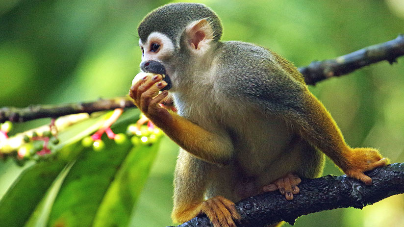 best-winter-vacations-peru-amazon-rainforest-monkey