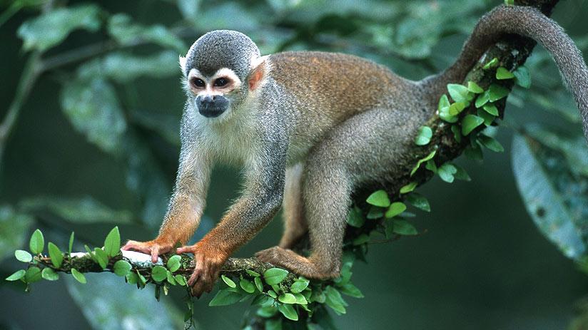cusco jungle tour monkey