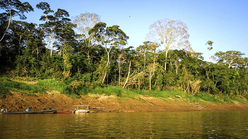 cusco jungle tour tambopata