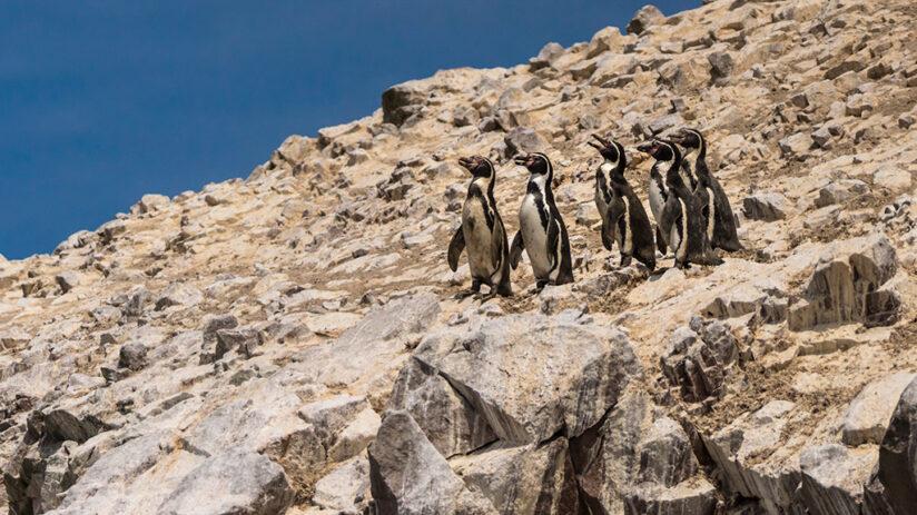 ecotourism in peru ballestas islands