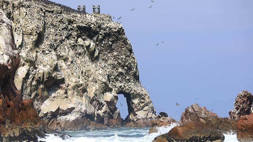 ecotourism in peru paracas