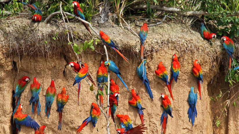 ecotourism in peru tambopata national reserve