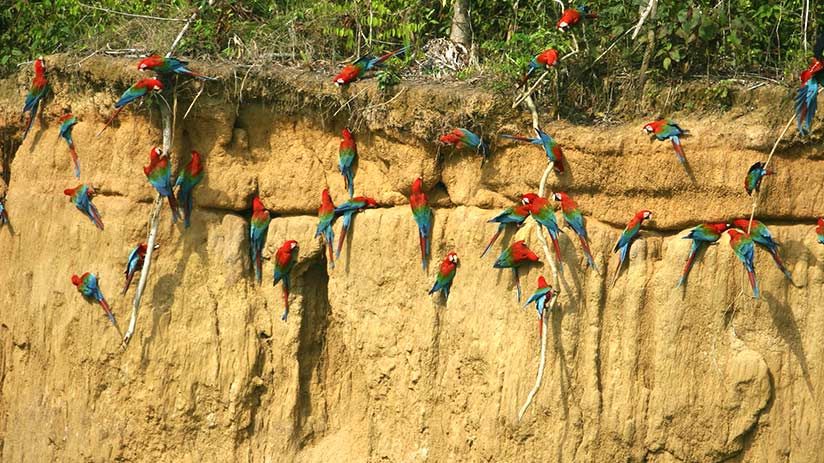 ecotourism in peru tambopata national reserve