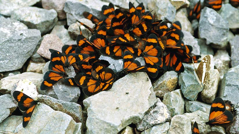 things to do in machu picchu butterfly mariposarium