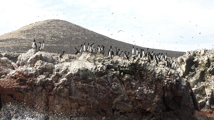 family vacation ideas ballestas islands