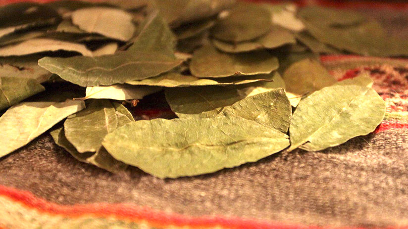 guide for a safe trip coca leaves