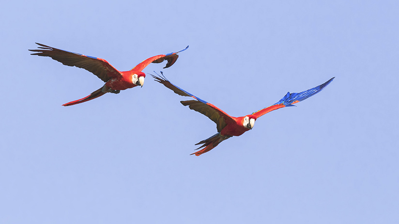 peru photography tour the amazon