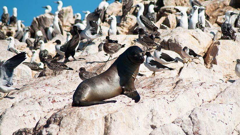 best famous places in peru paracas