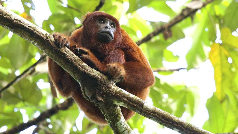 tourist attractions in peru manu national park
