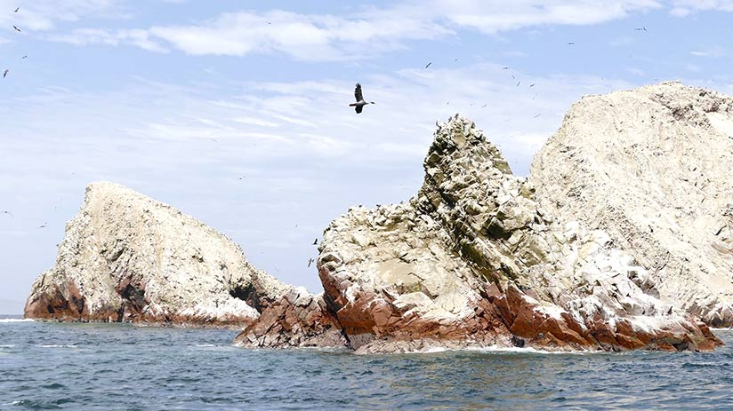 tourist attractions in peru paracas national reserve