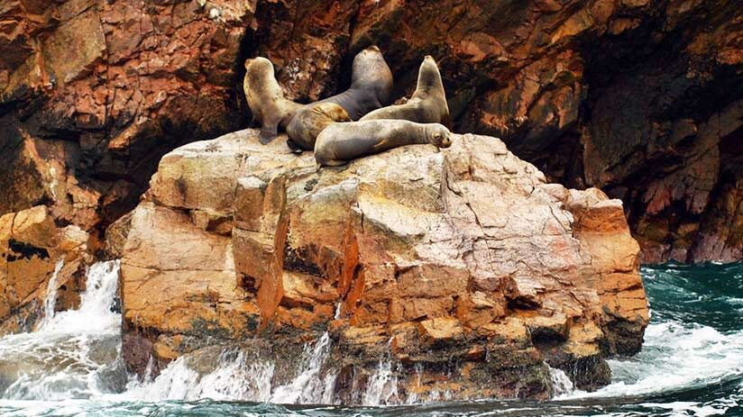 tourist attractions in peru paracas and ballestas islands