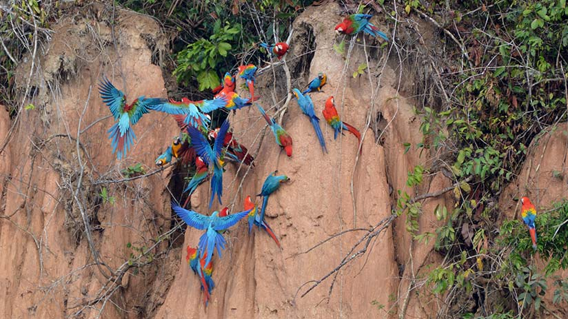 fun things to do in peru see macaws