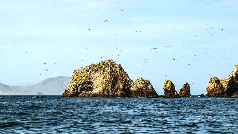 must see places in peru paracas national reserve