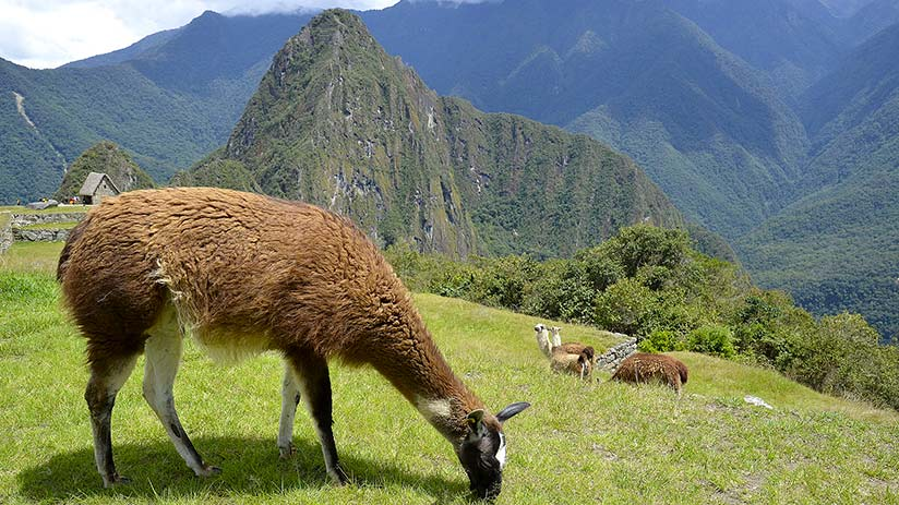 tourist sites in peru machu picchu