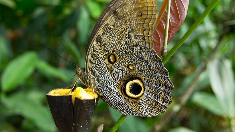 things to do in iquitos butterfly farm
