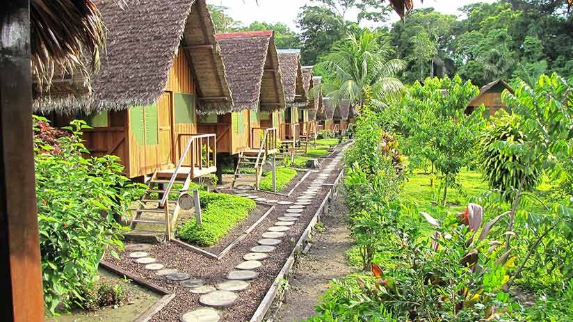 things to do in iquitos stay in a jungle lodge