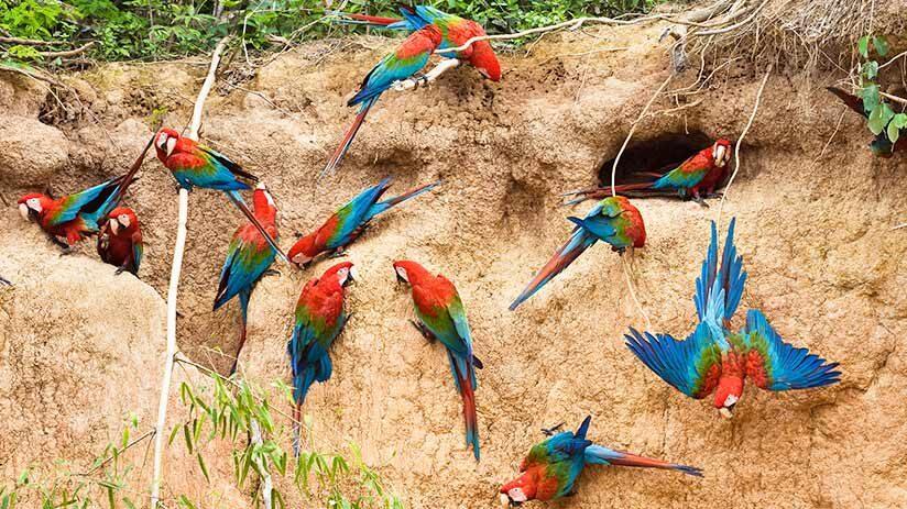 amazon tours from cusco wildlife in tambopata