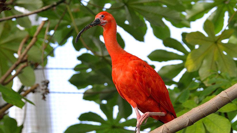 amazon in peru reasons to visit animals