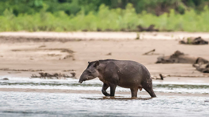 amazon in peru reasons to visit protected areas
